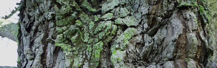 tree-header